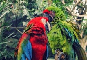 Zoológico en Irtra Mundo Petapa